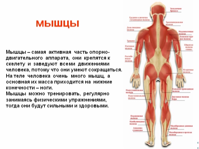 http://dompolnajachasa.at.ua/_pu/9/49510611.jpg