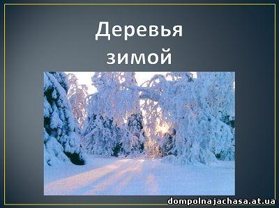 презентация деревья зимой