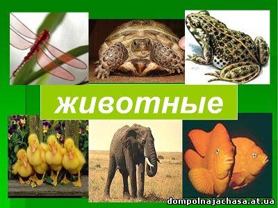 презентация виды животных