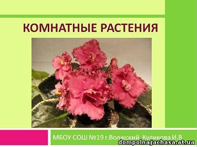 презентация Комнатные растения