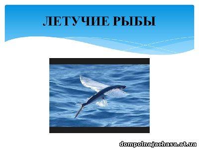 презентация Летучие рыбы