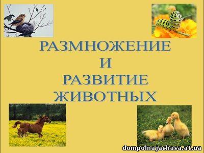 презентация Размножение животных
