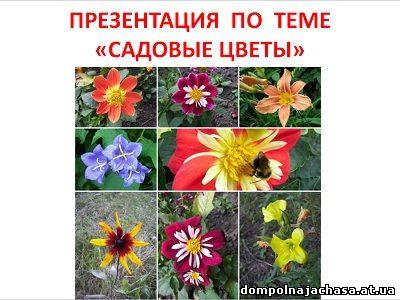 презентация Садовые цветы