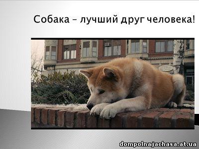 презентация Собака лучший друг человека