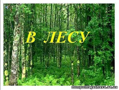 презентация лес