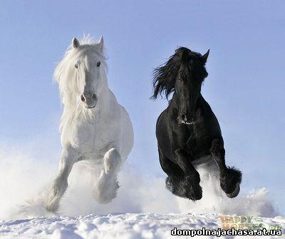 пазл лошади