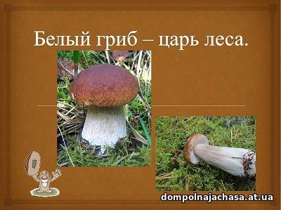 презентация Белый гриб