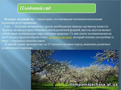 презентация плодовый сад