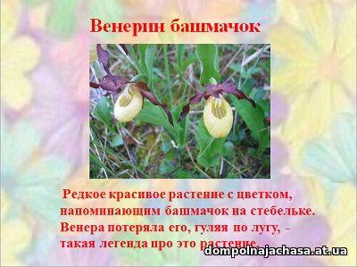 презентация необычные растения
