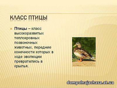 презентация Птицы 1