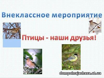 презентация Птицы 3