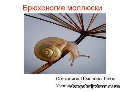 презентация Брюхоногие моллюски