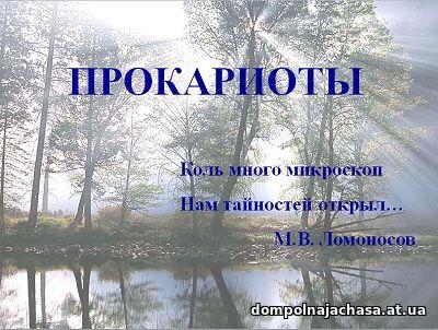 презентация Прокариоты