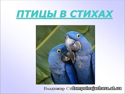презентация Птицы в стихах