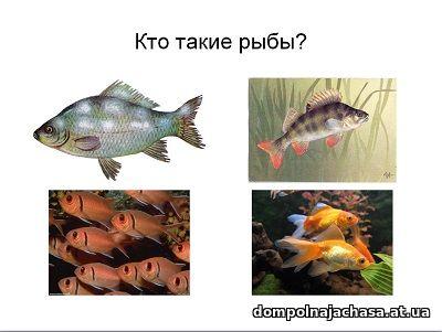 презентация Кто такие рыбы