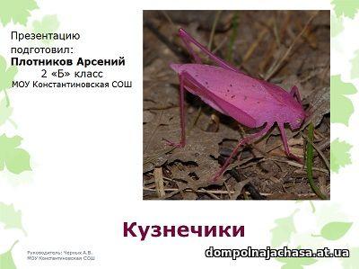 презентация Кузнечики