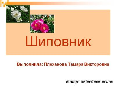 презентация Шиповник
