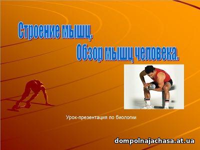 презентация Строение мышц