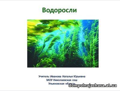 презентация Водоросли